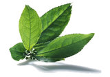 Dieetcaps Pro 2.0 (60 capsules) afslankpillen